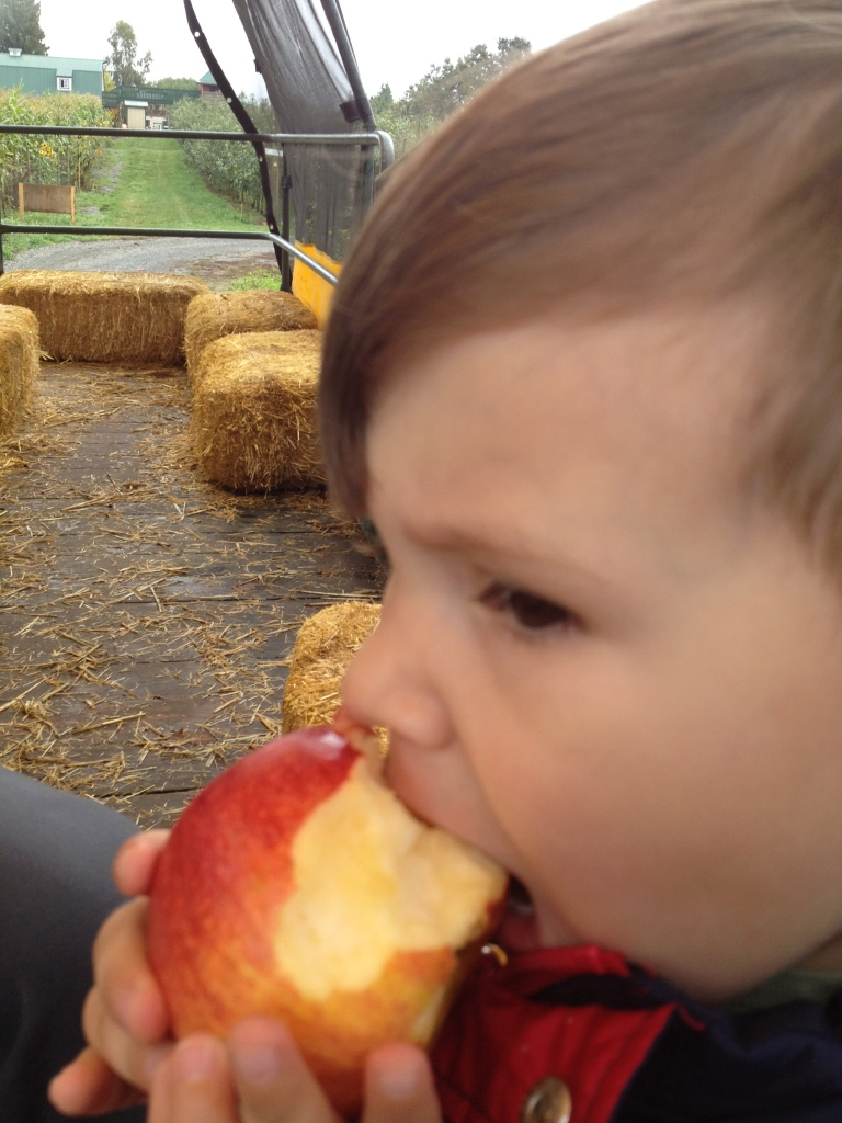 Lion thought the alkamene was the best one out of all the apples we tried.